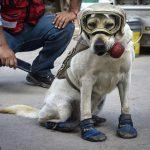 HEROJ FRIDA: Ova kujica je pronašla 52 osobe u ruševinama zemljotresa u Meksiku!