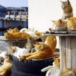 JAPAN sprovodi možda i najbolju kampanju za UDOMLJAVANJE napuštenih maca!