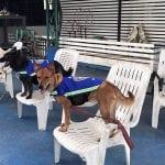 """ČUVARI GRADA: Napušteni psi dobijaju """"pametne prsluke"""" i upozoravaju na opasnost!"""