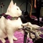 SAD: Mačja putujuća trupa Acro-cats udomila više od 200 mačića
