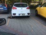 UŽAS: Automobil beogradskih tablica parkiran preko leša psa!