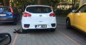 automobil petface