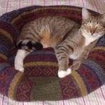 FOTO: Kako da stari džemper pretvorite u preslatki krevet za ljubimce!