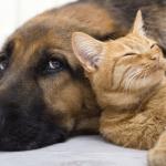 Psi VS. mačke: Istraživanje otkriva za kog ljubimca je potrebno više novca