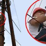 SVAKA ČAST: Zaječarski električar u akciji spasavanja mace sa bandere! (VIDEO)