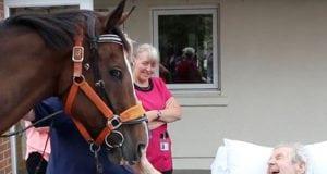 konja petface