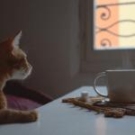 NEOBIČAN KAFE: Želite li i mačku uz kafu? Da, molim Vas!