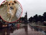 MI SMO NJIHOV GLAS: Potpiši PETICIJU protiv ubijanja pasa u Kraljevu!