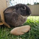 Skromni zeka: Preslatka pufnica voli da se igra sa kutijama i kamenjem