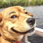 Ako vaš pas radi ovu smešnu stvar, znači da vas voli!