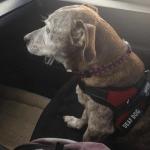 Gluvi pas Solo 11 godina bio napušten na ulici, a sada uživa u prvom domu!