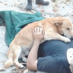 Pas Toni se nije odvajao od povređenog vlasnika koji je čekao pomoć