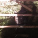 ENGLESKA: Pas vezan za ogradu, ostavljen u mraku!