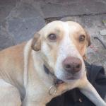 Ovaj pas je PREŽIVEO TROVANJE I ŠINTERE – sada mu moramo naći DOM!