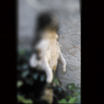 STRAVIČNO NASILJE U PANČEVU: Mačka pretučena i obešena o štrik za veš!