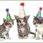 POKLON ZA BEOGRAĐANE: Žurka za kuce, mace, feretke i SVE ljubimce – sa i bez pedigrea!