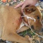 INCIDENT U VRANJU: Pas, pored Osnovne škole, upucan puškom!