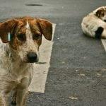 PO NALOGU PREMIJERA: Sarajevske pse ubijaju na gradskoj deponiji Smiljevići!