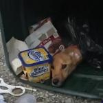 Žena je bacila svog psa u kontejner, a nakon 3 dana su je naterali da ZAŽALI!