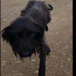 BEOGRAD: Pas Šurda pronađen na deponiji – sada treba NAŠU POMOĆ!