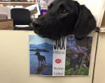 KAKAV RADNIK! Pas Džekson je omiljeni radnik u POŠTI!