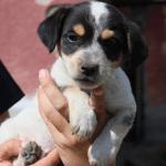 """PAS NIJE IGRAČKA: Udomili štene Ogija, pa ga vratili jer """"piški i kaki svuda""""!"""