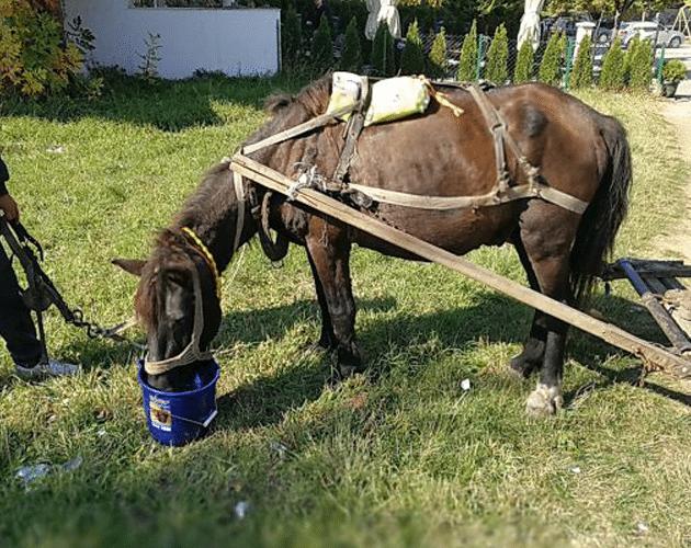 konj srušio petface