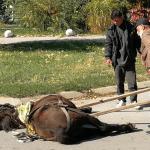 TUŽNA SLIKA IZ NIŠA: Konj se od umora srušio nasred ulice!