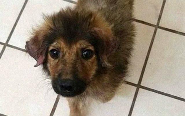 Tromesečno štene trčalo ulicama vrištući od bola dok ga nisu čuli