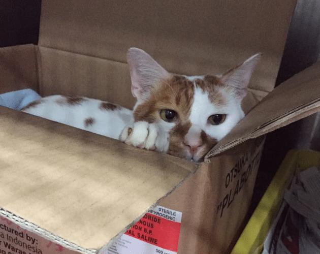 kutija petface