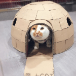 Veterinarska ambulanta pravi čuda od kartonskih kutija za svog mačka!