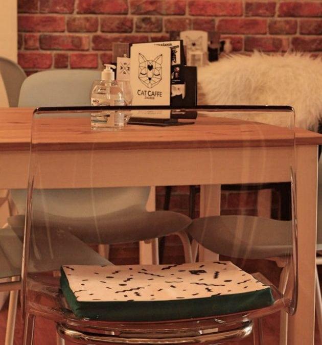 mačiji kafić petface