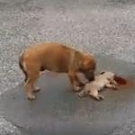 TUGA U KRALJEVU: Majka pokušavala satima da oživi štene, koje je pregazio auto! (VIDEO)