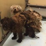 Psi ućebane dlake do neprepoznatljivosti sada dobijaju pomoć