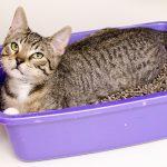 POSIP: Saveti za korišćenje kako bi vaša maca bila srećna