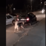 CRNA GORA: Vezao psa za automobil i vukao ga ulicom, neki kažu NIJE STRAŠNO!