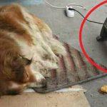 Fotografija koja je oduševila svet: Izneo grejalicu na ulicu da ugreje napuštenog psa!