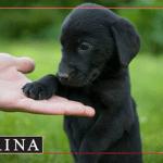 RUŠIMO PREDRASUDE: Zašto se crni psi teže udomljavaju?