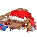 NOVI SAD: Stiže Deda Mraz za ljubimce, a vi i donirajte ZA NAPUŠTENE PSE!