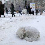 NOVI ZAKON: Svako ko ostavi psa na zimi i niskim temperaturama biće KAŽNJEN!