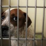 BANJA LUKA: Veliki broj napuštenih pasa –  nedovoljno kapaciteta u azilu!