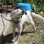 DANTEOV PAKAO: Vruća voda, parče hleba i život na lancu od pola metra!