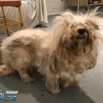 Pas iz prihvatilišta ne skida osmeh sa lica zbog NOVE FRIZURE