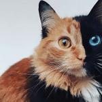PREDIVNA: Mačka kao najslađa greška koja se ikad desila prirodi!