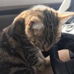 IZNENAĐENJEEE! Mačka uskočila u auto tražeći pomoć!