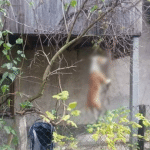 MONSTRUOZAN ZLOČIN U SARAJEVU: Pas obešen o drvo!