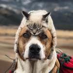 Pas i mačka zajedno na planinarenju, uvek i svuda!