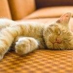 Mačke spavaju do 20 sati dnevno – a znate li zašto?