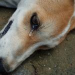 ZADRŽITE SUZE: Najtužnija pesma posvećena napuštenim psima!