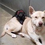 Drugari Feliks i Oskar izbegli eutanaziju i zajedno kreću u nove pohode!